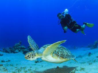 viaje a galapagos-buceo en galapagos
