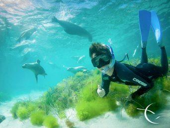 Galapagos Buceo