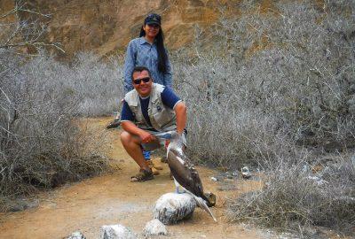 Islas galápagos - piqueros de patas azules