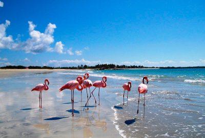 Viajes a Galapagos- Flamingos