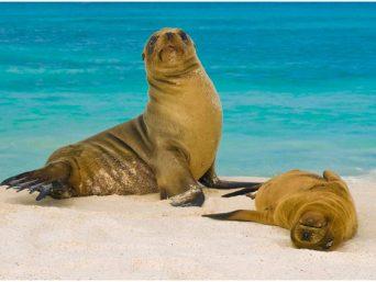 paquetes economicos a galapagos-