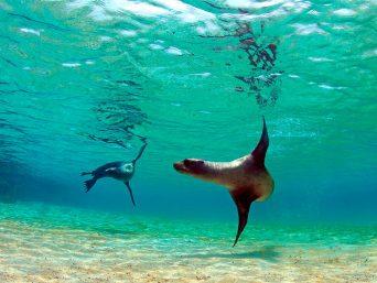 Nadando con lobos marinos en tu Luna de Miel