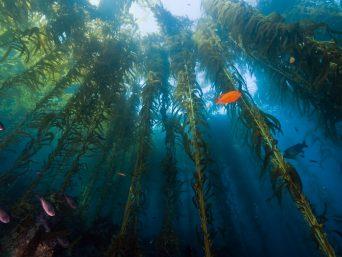 tours galapagos-Santa Cruz