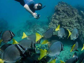 Galapagos-snorkel