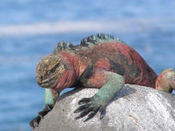 Galapagos Turismo